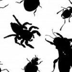 הדברת נמלים מינים וסוגים